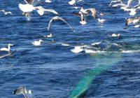 L'Esigelec participe à un projet RNI «Terre & Mer»