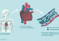 Une avancée dans la recherche sur l'insuffisance cardiaque
